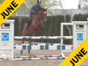 Available on DVD No.2<br>Ludger Beerbaum<br>Day 1<br>Riding & Lecturing<br>Quertseros<br>Oldenburg<br> by: Quebec<br>5 yrs. old Gelding<br>Training: 1.20 meters<br>Duration: 32 minutes