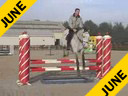 Eric van der Vleuten<br>Riding & Lecturing<br>Saforet<br>by Lord Lapanto<br>Holsteiner<br>7 yrs. old<br>Training: 1.35 - 1.40 meters<br>Duration: 27 minutes