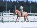 Havens SchattRiding & LecturingQuintonGerman Warmblood4 yrs. oldTraining: Pre-Green HunterDuration: 24 minutes