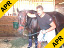 Sal Salvetti Massage Therapy For Jumpers Westfalen 12 yrs. old Mare Training: PSG Duration:35 minutes