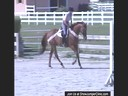 Anne Kursinski<br>Riding & Lecturing<br>Eros<br>The Come Back<br>Australian Thouroughbred<br>19 yrs. old Gelding<br>Training: The Come Back: Grand Prix<br>Duration: 27 minutes