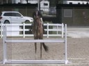 Louise Serio<br>