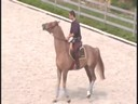 Rodrigo Pessoa<br>Riding & Lecturing<br>Red Hot<br>KWPN<br>8 yrs. old Gelding<br>Training: Basic Training<br>Duration: 27 minutes
