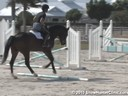 Sandy Ferrell<br>Riding & Lecturing<br>Felix<br>Warmblood<br>4 yrs. old<br>Training Baby Green Hunter<br>Duration: 33 minutes
